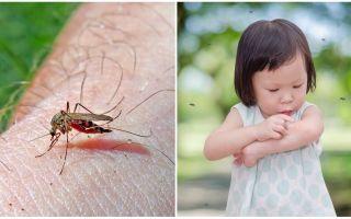 Câte zile merge mâncatul de țânțari?