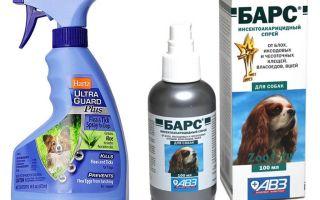 Cel mai bun spray de purici pentru câini