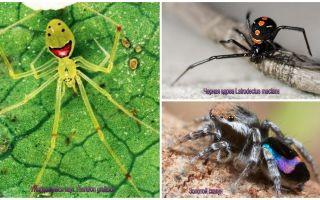 Cei mai frumosi păianjeni din lume