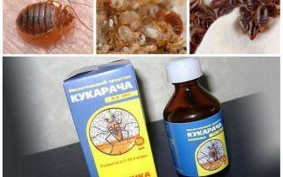 Cucaracha remediu pentru ploșnițe