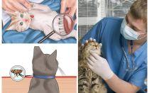 Cum sa scapi de purici la o pisica sau o pisica acasa
