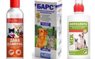 Cel mai popular și eficient șampon de purici pentru câini