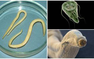 Comparație între Giardia și viermi