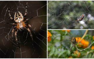 Spiderii știu să zboare