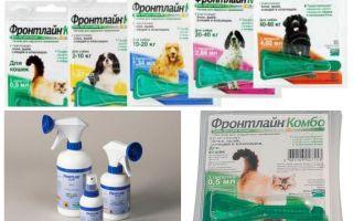 Frontline picături de purici și spray