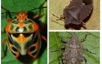 Ce arată bug-urile în fotografie