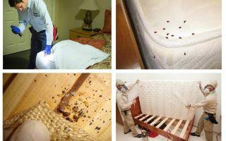 Unde se ascund bug-uri în apartament