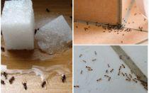 Cum să scapi de furnici într-o călătorie privată casa folk