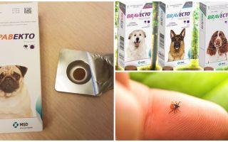 Tabletele Bravekto de la căpușe pentru câini