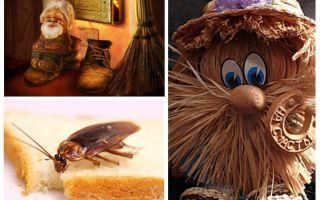 Conspirația - cum să scapi de gândaci într-un apartament o dată pentru totdeauna