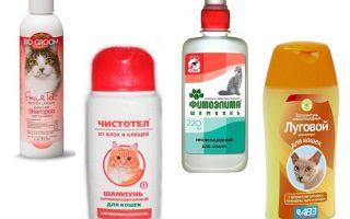 Cel mai bun șampon de purici