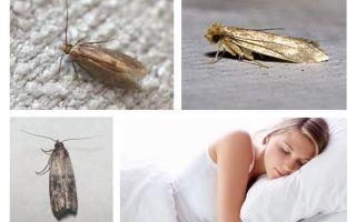 Ce visează molii