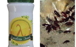 Lambda Probe Remedy pentru gândacii