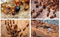 Cine sunt termitele?