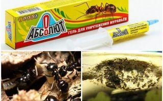Absolut de la furnici