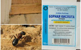 Cum să elimini furnicile dintr-o casă din lemn