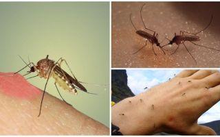 De ce țânțarii în natură