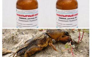 Amoniacul de la medvedki