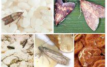Cum să aduci molia de mâncare în bucătărie