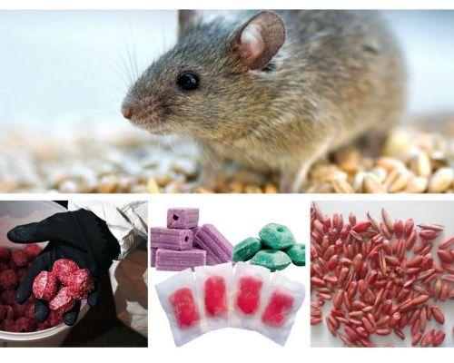 Otrava pentru șobolani și șoareci