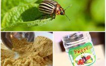Mustar și oțet împotriva gândacului de cartof Colorado: proporții și recenzii