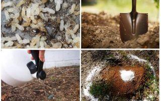 Cum să obțineți furnicile din remedii folclorice de grădină