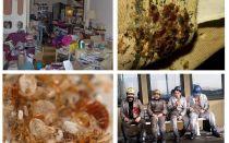 De unde vin albinele din apartament și cum să scapi de ele