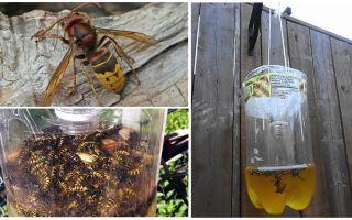 Căpriori de casă pentru viespi și viespi