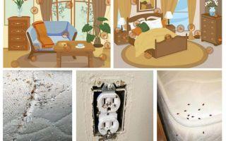Combaterea eficientă cu ploșnițe în apartament