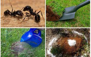 Cum sa scapi de furnici in remediile folclorice de gradina