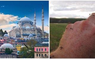 Există țânțari în Turcia