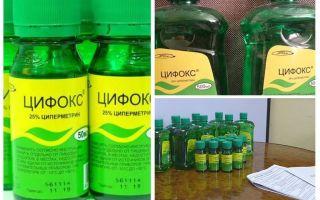 Cyclox remediu pentru ploșnițe
