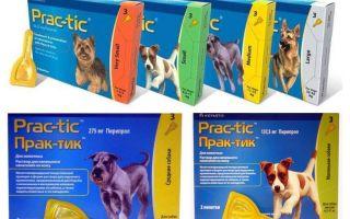 Picături Practici de purici și căpușe pentru câini