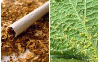Tutun împotriva afidelor