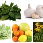 Remedii populare pentru purici