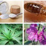 Remedii populare pentru boabele de ploaie