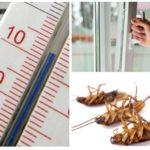 Răciți împotriva gândacilor