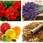 Remedii populare pentru molii