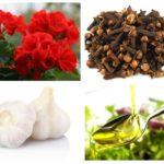 Remedii populare pentru muguri