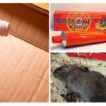 Rat lipici