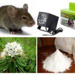 Metode de tratare a șoarecilor