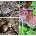 Câmpul mouse-ului