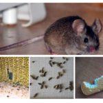 Prezența șoarecilor în apartament
