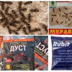 Ant Chemicals