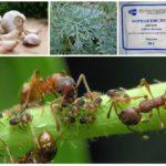 Plante în lupta împotriva insectelor