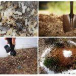 Ants metode de control
