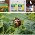 Metode de tratare a gândacilor frunzelor