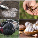Căi populare pentru a face față gândacilor Colorado