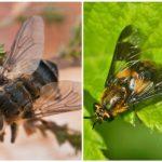 Gadfly și gadfly