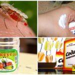 Remedii populare pentru mușcăturile de țânțari